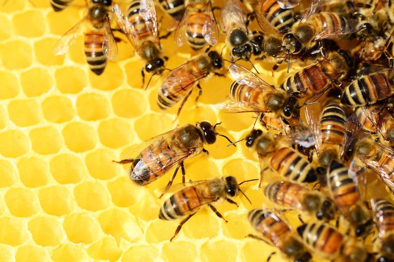 Testato per voi: il polline biologico dell'Apicoltura Nucci