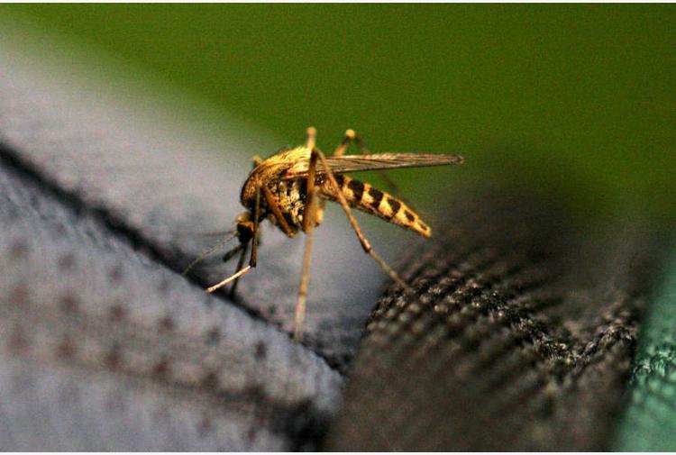 Nuove zanzare mutanti stanno per invadere l'Italia, sono più aggressive e resistono al freddo